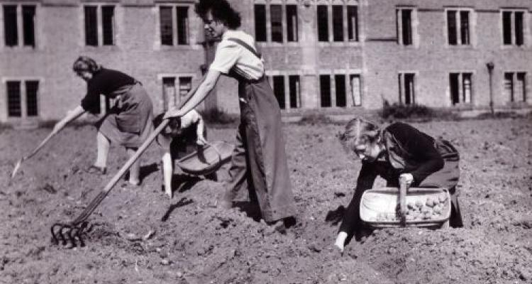 Students raking and collecting potatoes in the College grounds, taken by Fox Studios, 1942 (archive reference: GCPH 10/12/15)